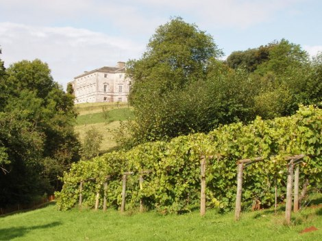 Das Sharpham House und die Weinberge.   © Copyright David Hawgood