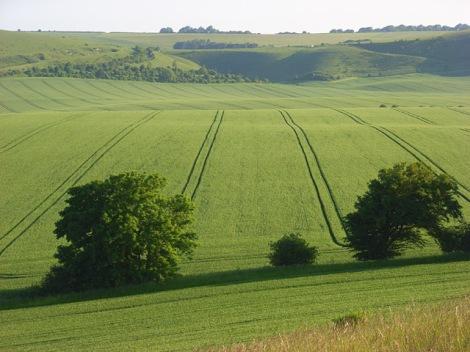 Woodborough Hill in Wiltshire. Hier wurde das KLF-Video gedreht.   © Copyright Andrew Smith
