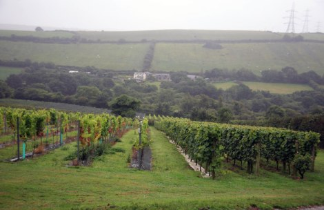 Camel Valley Vineyards bei Bodmin in Cornwall.   © Copyright roger geach