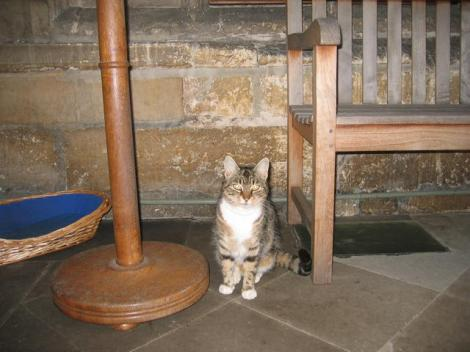 Eine Nachfolgerin von Tiddles in St Mary's.    © Copyright David Stowell and   licensed for reuse under this Creative Commons Licence.