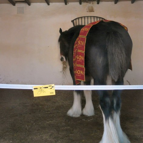 Da wir Royale von der Robinsons's Brewery in Stockport bei Manchester vermissten, hier ist wenigstens ein Foto dem zweiten Shire Horse.   © Copyright Gerald England and licensed for reuse under this Creative Commons Licence.