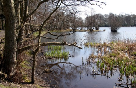 Hier am Bolam Lake in Northumberland soll The Beast of Bolam leben.    © Copyright Phil Thirkell and   licensed for reuse under this Creative Commons Licence.