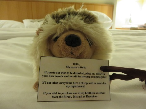 Diese freundliche New Forest-Tier erwartete uns im Bett. Eigenes Foto.