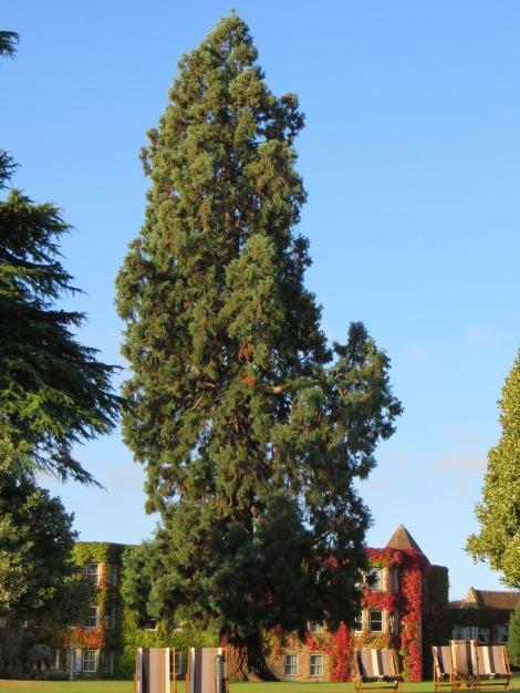 Einer der schönen Parkbäume vor dem East Wing. Eigenes Foto.