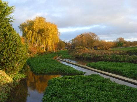 Der Ewelme Brook.    © Copyright Andrew Smith and   licensed for reuse under this Creative Commons Licence.