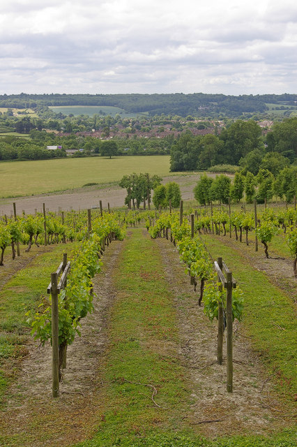 Godstone Vineyards.    © Copyright Ian Capper and   licensed for reuse under this Creative Commons Licence.