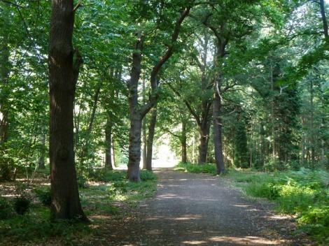 Den Black Park, wie auch alle anderen Wälder im Midsomer County, sollte man nachts besser nicht aufsuchen.  © Copyright Robin Webster and licensed for reuse under this Creative Commons Licence.