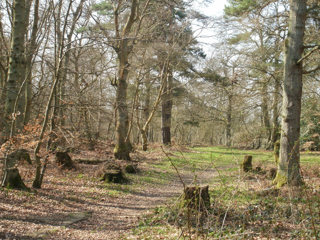 Hodgemoor Wood, Schauplatz des Verbrechens.  © Copyright Peter and licensed for reuse under this Creative Commons Licence.