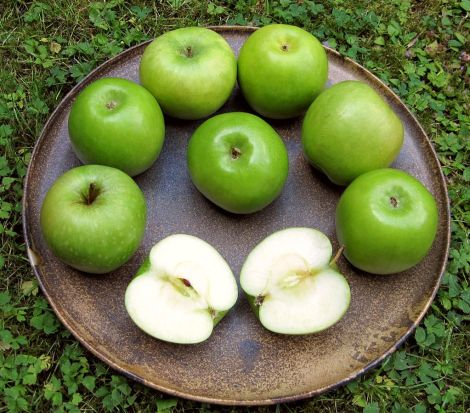 Granny Smith Äpfe. This work has been released into the public domain by its author, Kristina Walter.